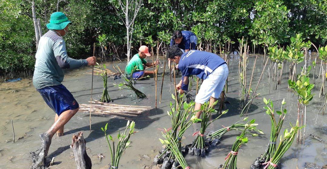 Rehabilitasi Ekosistem Mangrove di Wilayah Terdampak Rob dan Erosi di Pesisir Tambakrejo