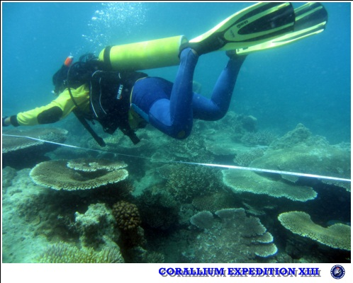 Diving Skills and Job Opportunities for Graduates of Faculty of Fisheries and Marine Sciences Undip